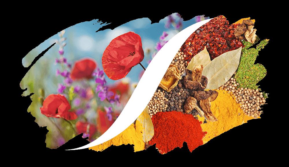 L'ARISÉ Eau de Parfum für die Frau | Blumig-Orientalisch