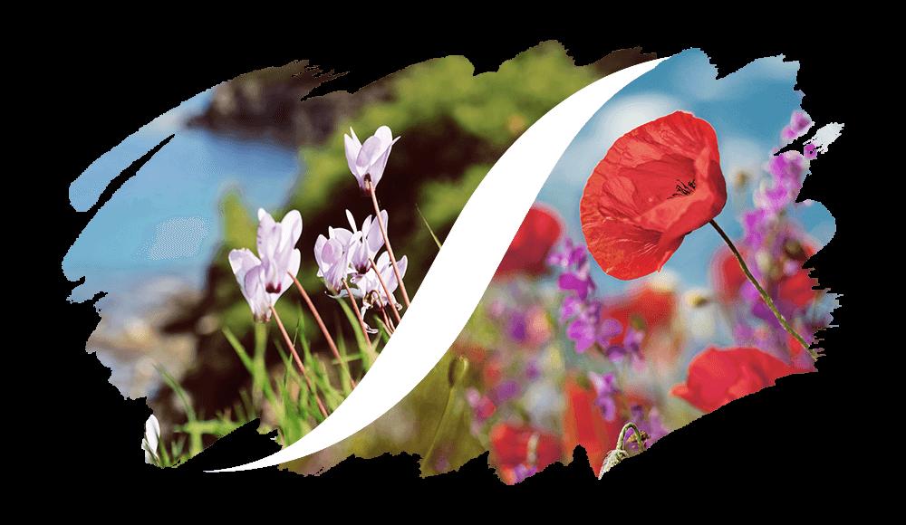 L'ARISÉ Eau de Parfum für die Frau | Chypre-Blumig