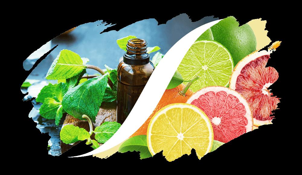 Aromatisch-Zitrisch online kaufen | L'ARISÉ