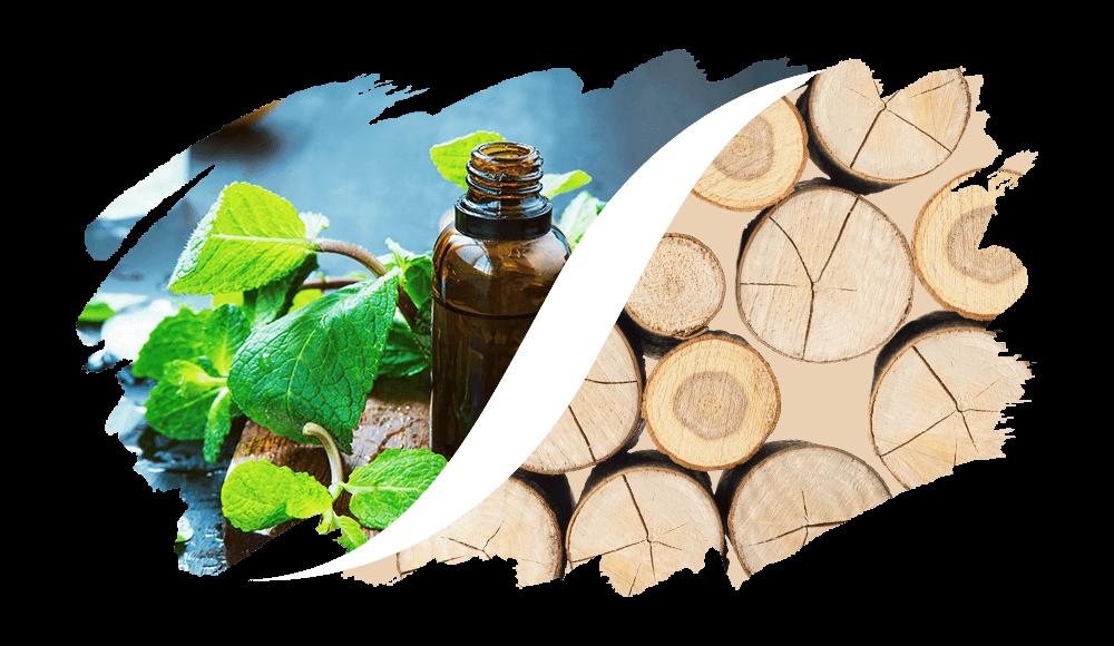 L'ARISÉ Eau de Parfum für den Mann | Aromatisch-Holzig