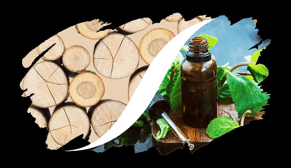 Holzig-Aromatisch online kaufen | L'arise