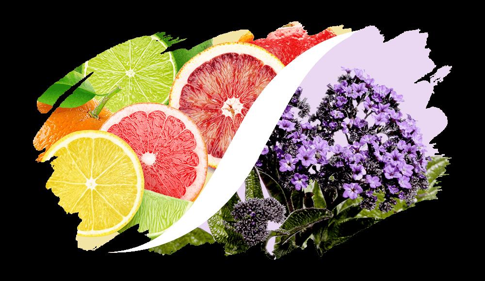 Zitrus-Aromatisch online kaufen | L'ARISÉ