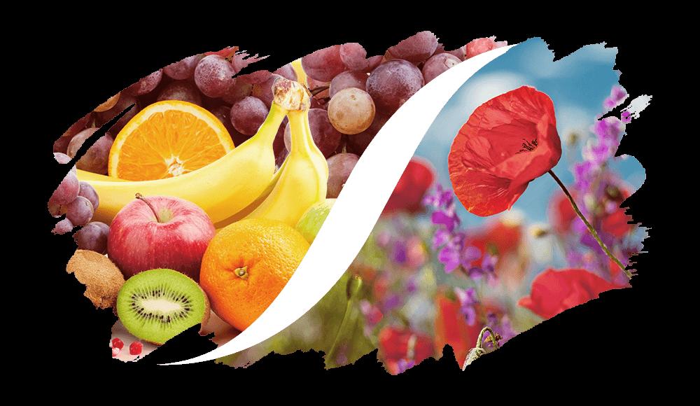 L'ARISÉ Eau de Parfum für die Frau | Fruchtig-Blumig