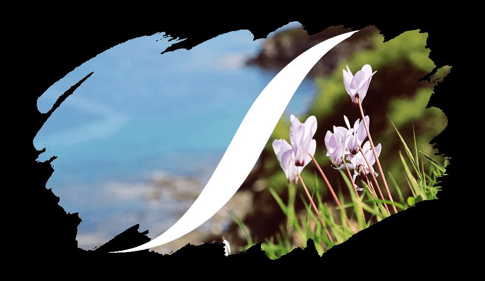 L'ARISÉ Eau de Parfum für die Frau | Chypre-Duftzwillinge
