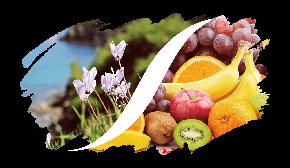 Chypre-Fruchtig online kaufen | L'arise