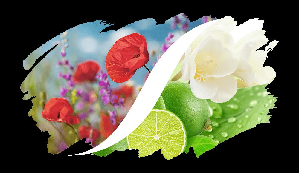 L'ARISÉ Eau de Parfum für die Frau | Blumig-Frisch