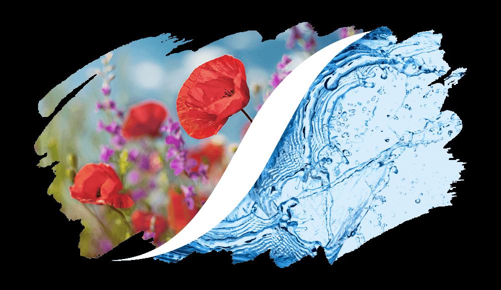 Blumig-Aquatisch online kaufen | L'arise