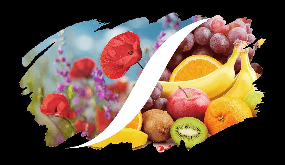 Profumi Equivalenti Floreali-Fruttati di L'ARISÉ