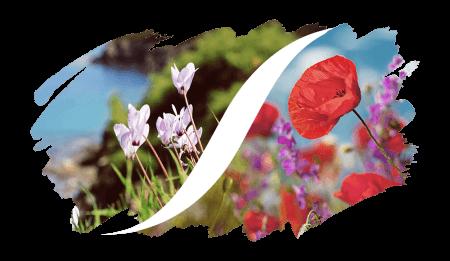 Cipriato-Floreale
